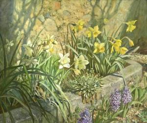 Narcisi in primavera